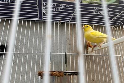 We hebben één van de three little birds gespot! © Ajax Life
